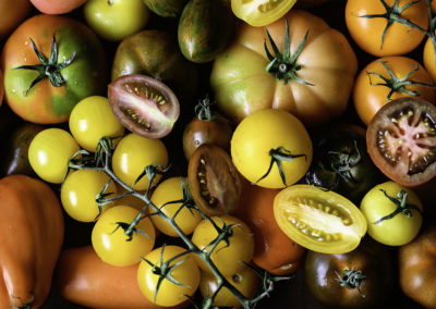 Seasonal ingredients, Isle of Wight tomatoes